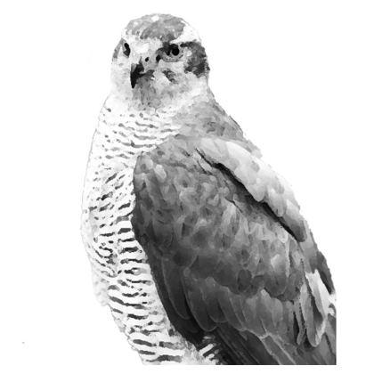Hawk Cushions