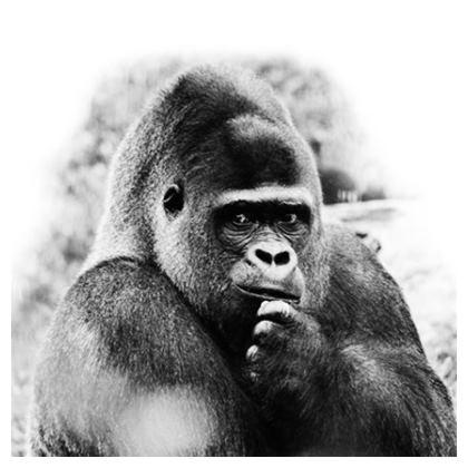 Thinking Gorilla Cushions