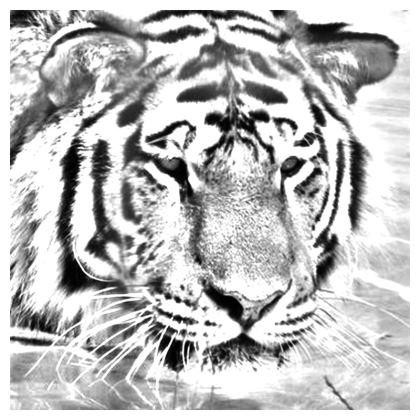 Tiger Cushions