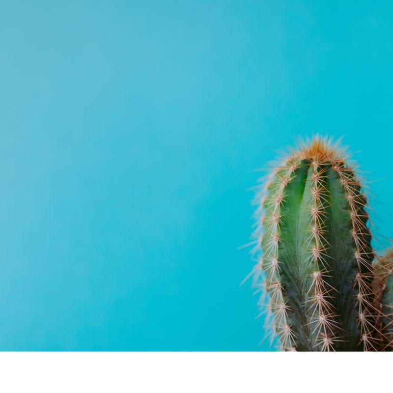 9738e7d02c Cactus on Turquoise Handbag
