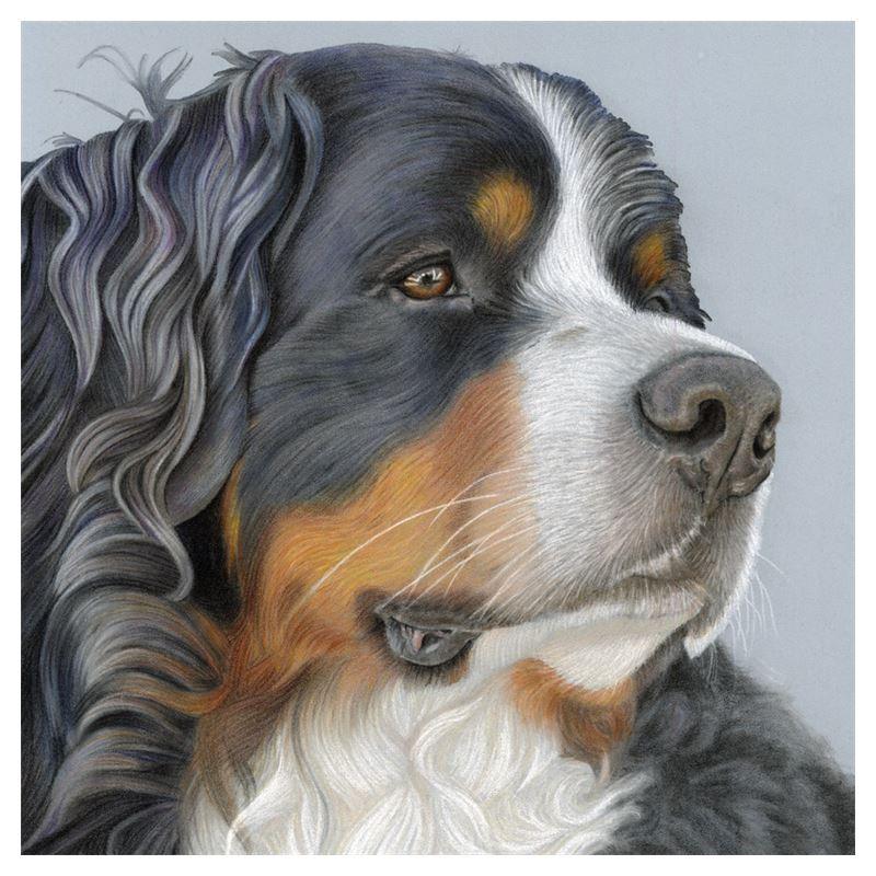 Bernese Mountain Dog Cushion Regal