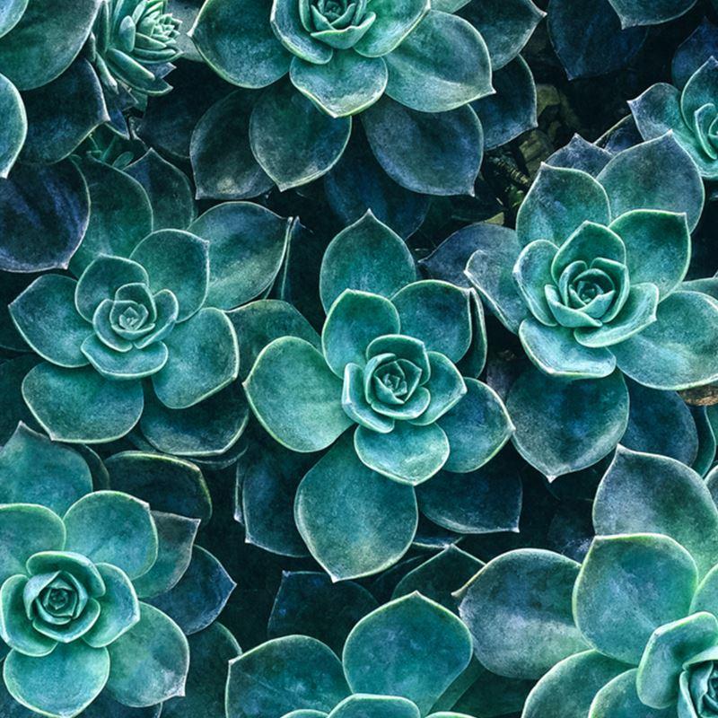 3ea7807538 51423 echeveria-succulents---leather-handbags 0.jpeg cache 7