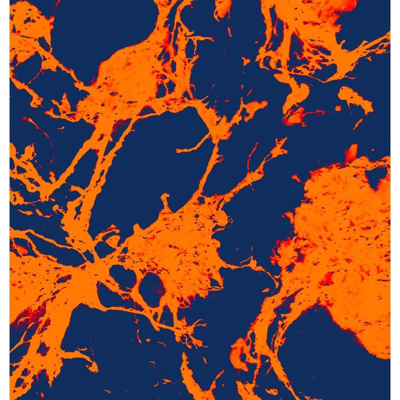 f05512604f2 69108 microscopic-blue-orange-print-cushion 0.jpeg cache 11