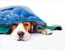 dog/ cat blanket