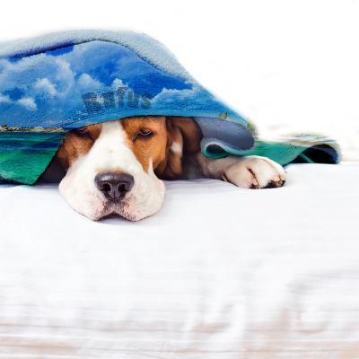 manta para mascotas