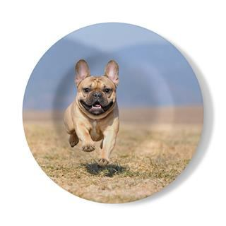 personalised decorative wall plate with dog