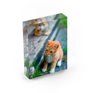acrylic block photo gift with cat