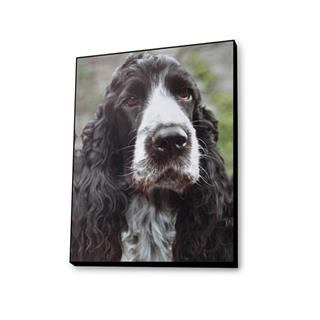 dog photo printed plaques