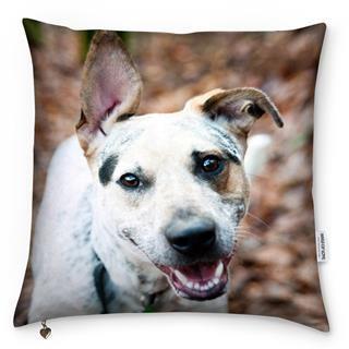 cuscino con foto cane