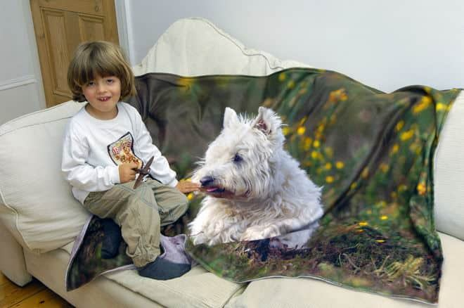 photo  blanket kid and dog