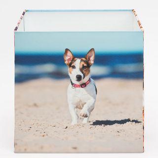 dog photo on square lampshade