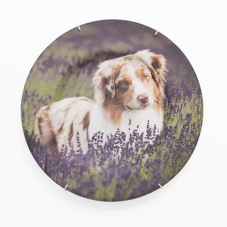 Animal pet photo decorative plate design