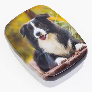 Dog lunch box design Pet
