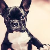 fotogeschenke hund