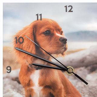 dog personalised photo clock with black numbers and black hands