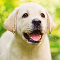Cadeaux pour animaux