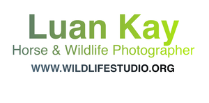 Luan Kay Photography Gift Store